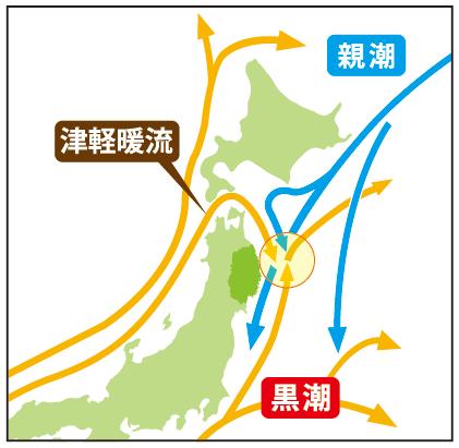 南から上がってくる「黒潮」と北からの「親潮」、日本海から津軽海峡を通ってくる「津軽暖流」